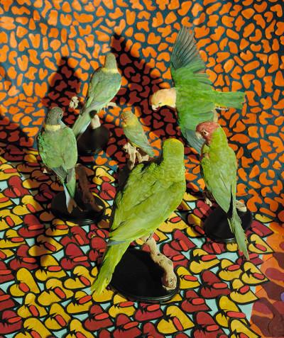 Jody Paulsen | Self Portrait with Banana | 2017 | Pigment Ink on HP Premium Satin Photographic Paper | 84.1 x 59.4 cm | Edition of 5 + 2 AP
