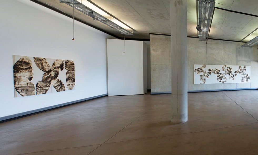 Histopathology, Regenration and Other Cases - Continued | 2014 | Installation View