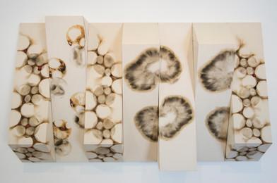 Sandile Zulu | Spinal Diagnoses | Scorched Canvas | 145 x 287.5 x 32 cm