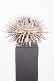 Ernst van der Wal | Untitled | 2019 | Wood, Ash and Imitlin | Size Variable