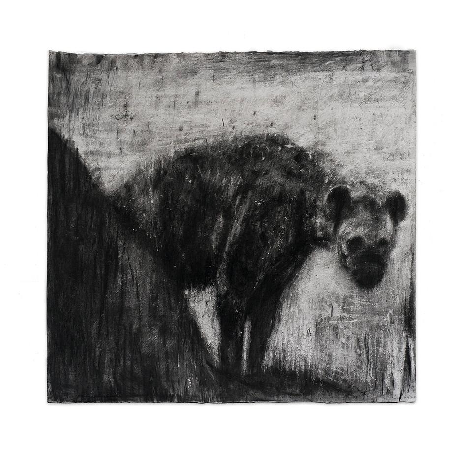 Johann Louw | Hiëna om die Hoek | 2017 | Charcoal on Hahnemühle | 123 x 140 cm