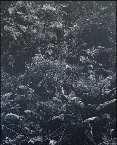 Peter Eastman | Undergrowth II | 2017 | Oil on Aluminium | 185 x 151 cm