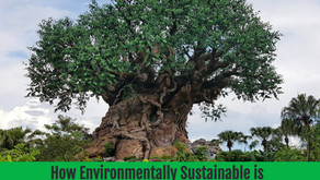 How Environmentally Sustainable is Disney World?