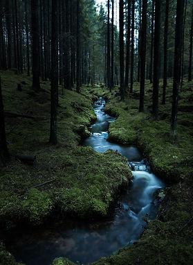 dark woods creek.jpg
