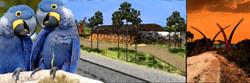 Estrada Parque Pantanal
