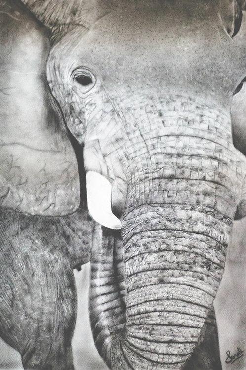 Single Elephant Charcoal