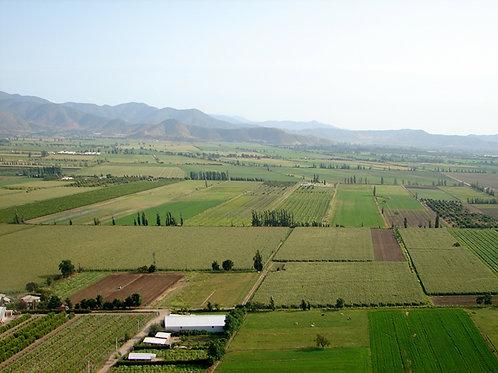 Ruta del Vino Colchagua