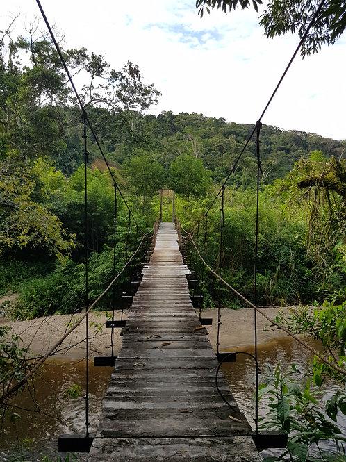 Tour Conexión Natural en la Selva - 4 Días / 4 Noches