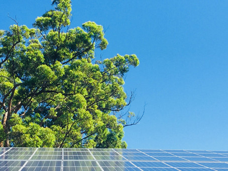 Renewable Energy_ Why You Should Switch to Solar Power