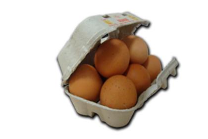 Huevos eco frescos 6 und L