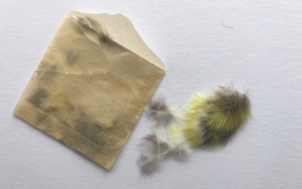 Unknown feathers