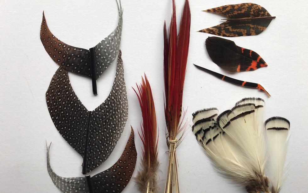 Argus, GP Swords, Amherst, Black Cockatoo,Dyed Turkey