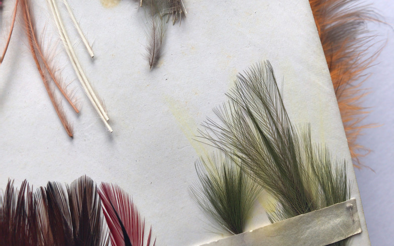 Touraco Hackles for Inky Boy