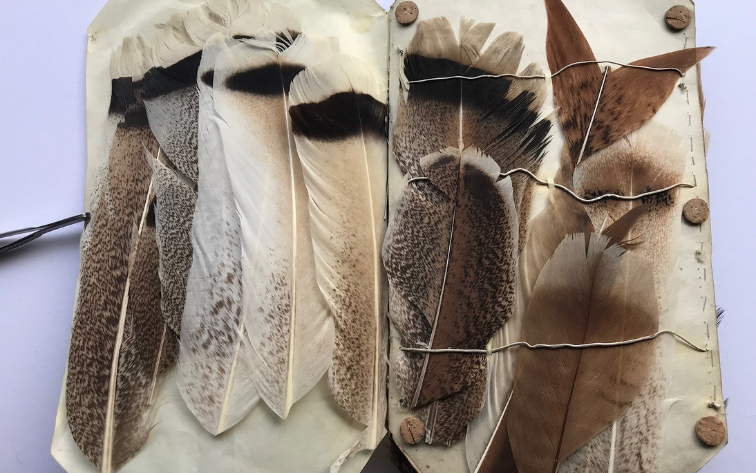 Various Turkey Feathers of superb quality