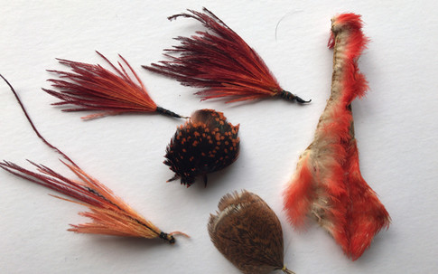 Dyed Starling- Ibis tufts and others