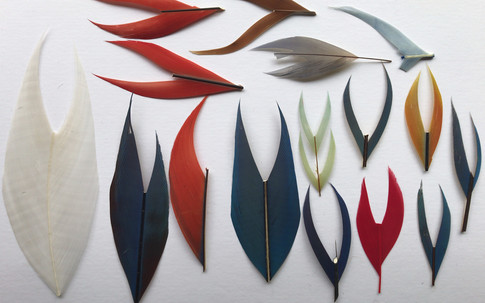 Mixed Parrot Feathers, and Silver pheasant