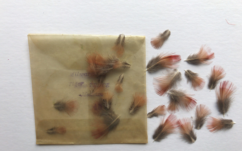 Potentially Magnificent BOP feathers from just next to the 'Collarette' used on the Inky boy
