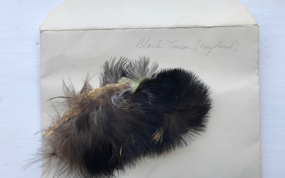 An example of the potential for Cross contamination - an envelope included in a lot marked Guy Heard - one of the major buyers involved in the original break-up of the items.