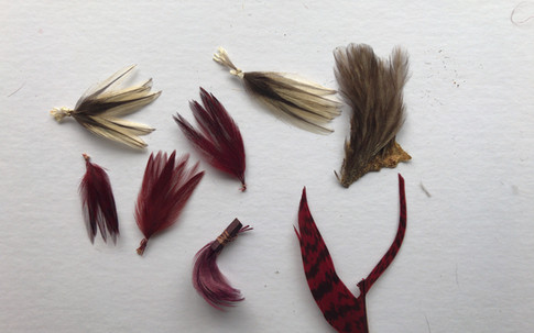 Small Hackles plus dyed peacock