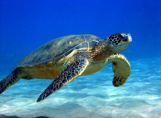 Рифы архипелага Симилан, Тайланд