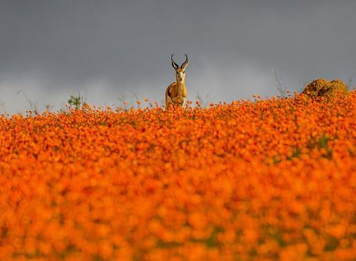 Малый Намакваленд, ЮАР