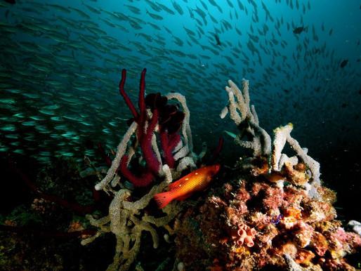Коралловые рифы, включая Око Мальдивов