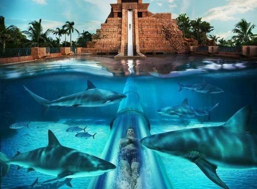 Встреча с акулами на Багамах