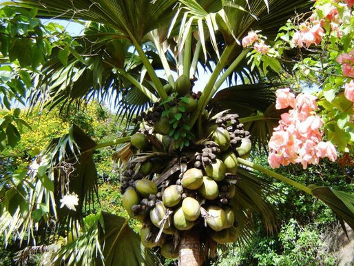 Заповедник «Майская долина» на острове Праслин