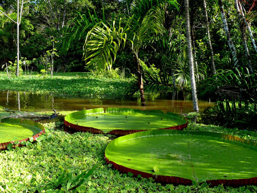 Центральная Амазония