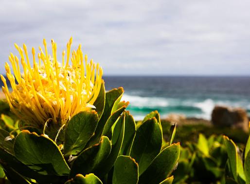 Капская флористическая область, ЮАР