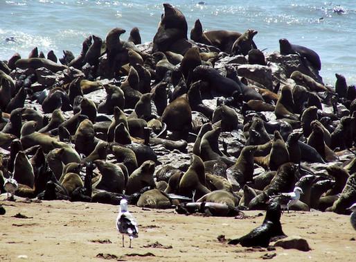 Остров Дукер, Южно-Африканская Республика