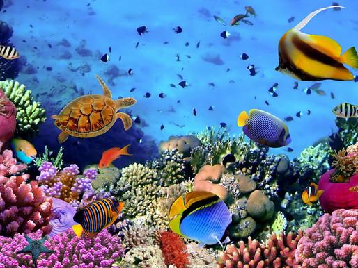 Подводные сады Хургады, Египет