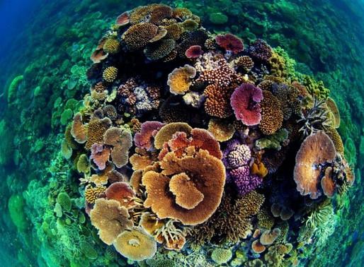 Южные рифы, Антильские острова
