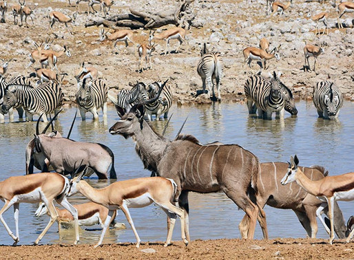 Транснациональный парк Лимпопо, на территории ЮАР, Зимбабве и Мозамбик