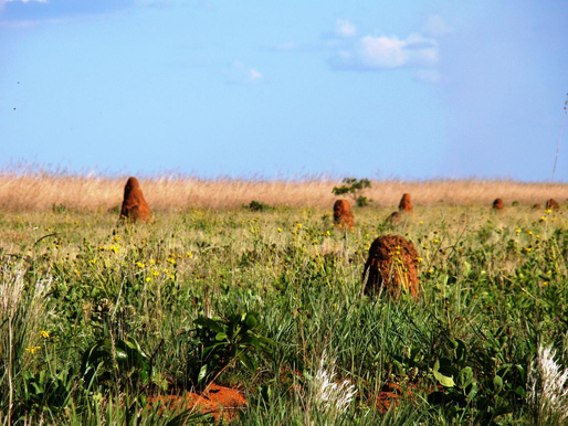 Национальный парк Эмас