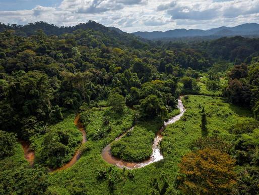 Москития - тропический лес с эндемичными видами животных, Гондурас.
