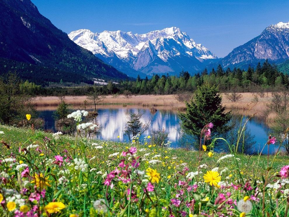 Картинка для рабочего стола альпийские луга