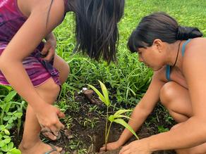 AFV distributes 3,000 tree seedlings to indigenous communities of Xingu