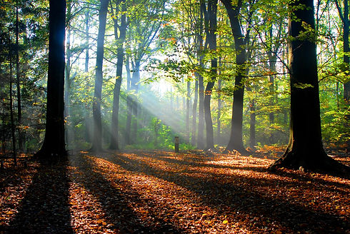 sunbeams pour into the autumn forest cre