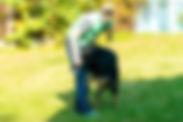Дрессировка собак. Выставка собак. Тестирование собак. Москва. Ховаварт. Яна. Работа. Рабочие собаки. Рабочие ховаварты. Редкая порода. Ховаварты Москвы. Ховаварт форум.
