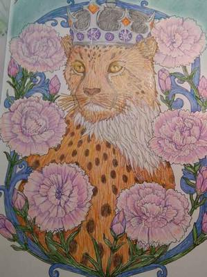 Cheetah Majestic - Donna Bost