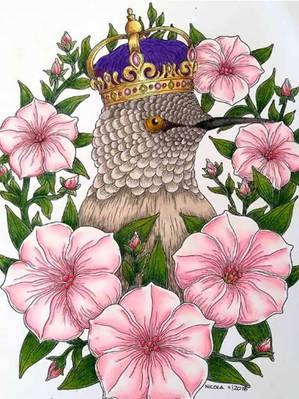 King Calypte Ann - Nicola Williams.jpg