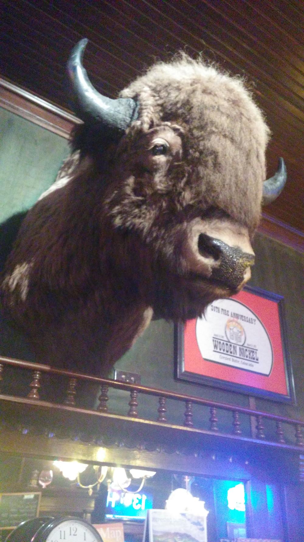 Buffalo Head at Wooden Nickel