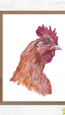 Chicken - Gallery Quality Print
