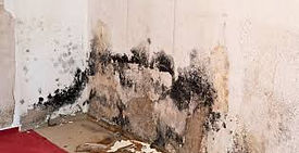 mold claims