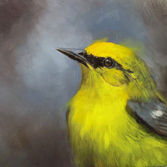 Let's Paint A Blue-Winged Warbler Bird