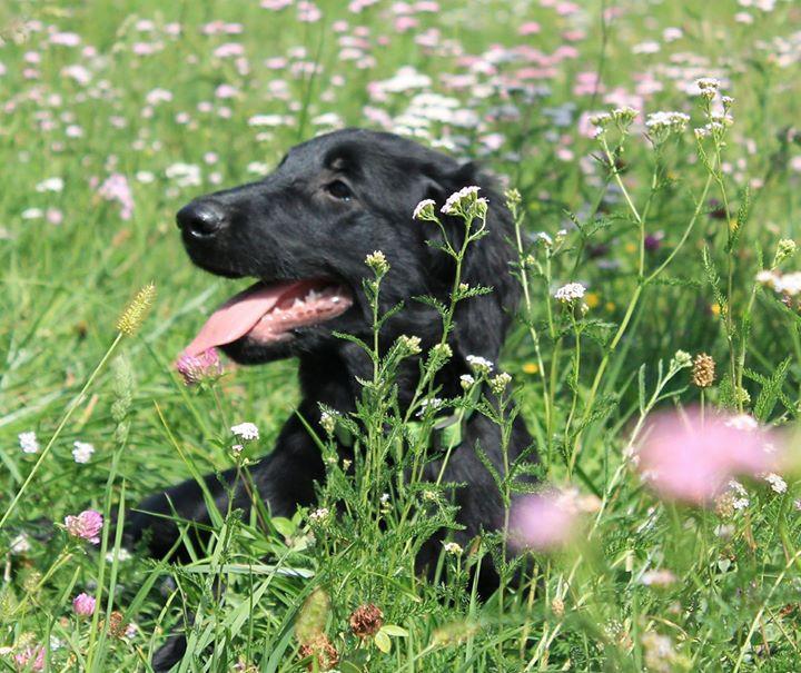 Karma cucciola in fiore