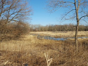 Wetland Delineation and the Growing Season
