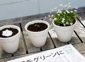 Mainichi Shinbun, Kertas Koran Yang Bisa Berubah Menjadi Tanaman Hidup