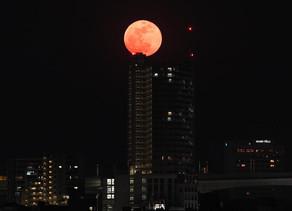 Tsukimi, Festival Yang Menikmati Keindahan Bulan